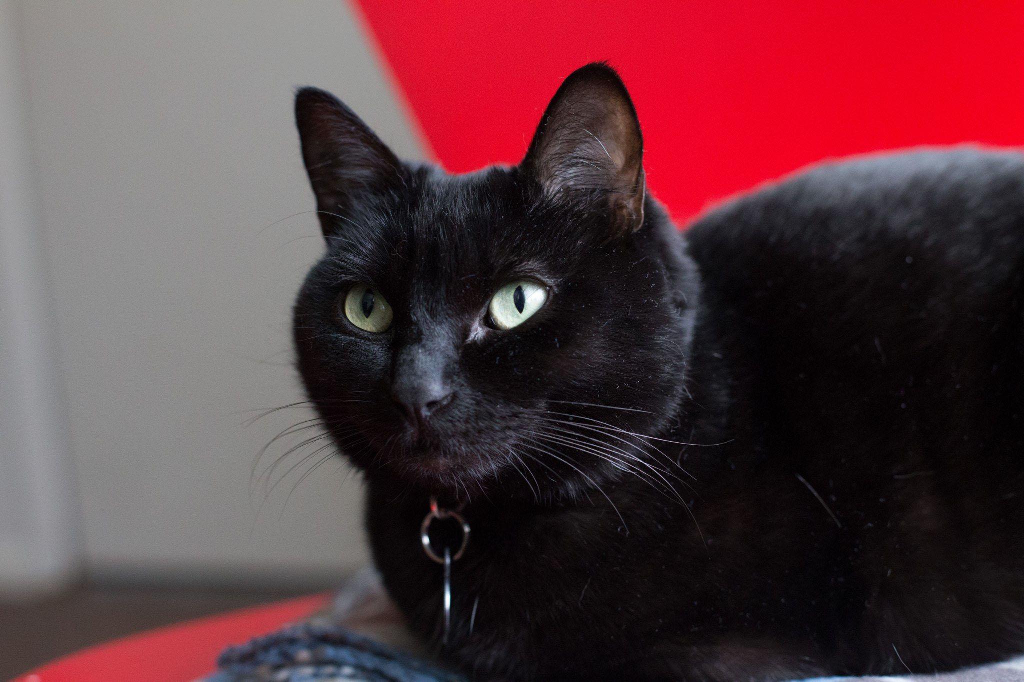 Ella the cat